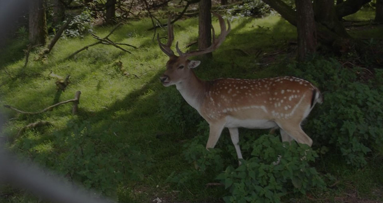 Farran Deer
