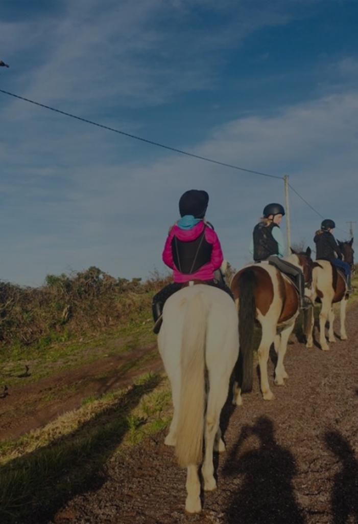 Coachford equestrian